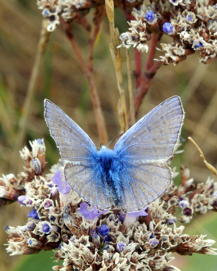 1000+ ideas about Papillon Colibri on Pinterest.