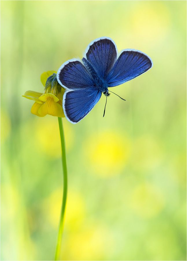 1000+ images about Animal love: Butterflies on Pinterest.