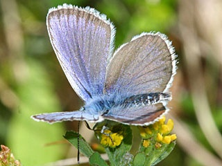 1000+ images about schmetterling on Pinterest.