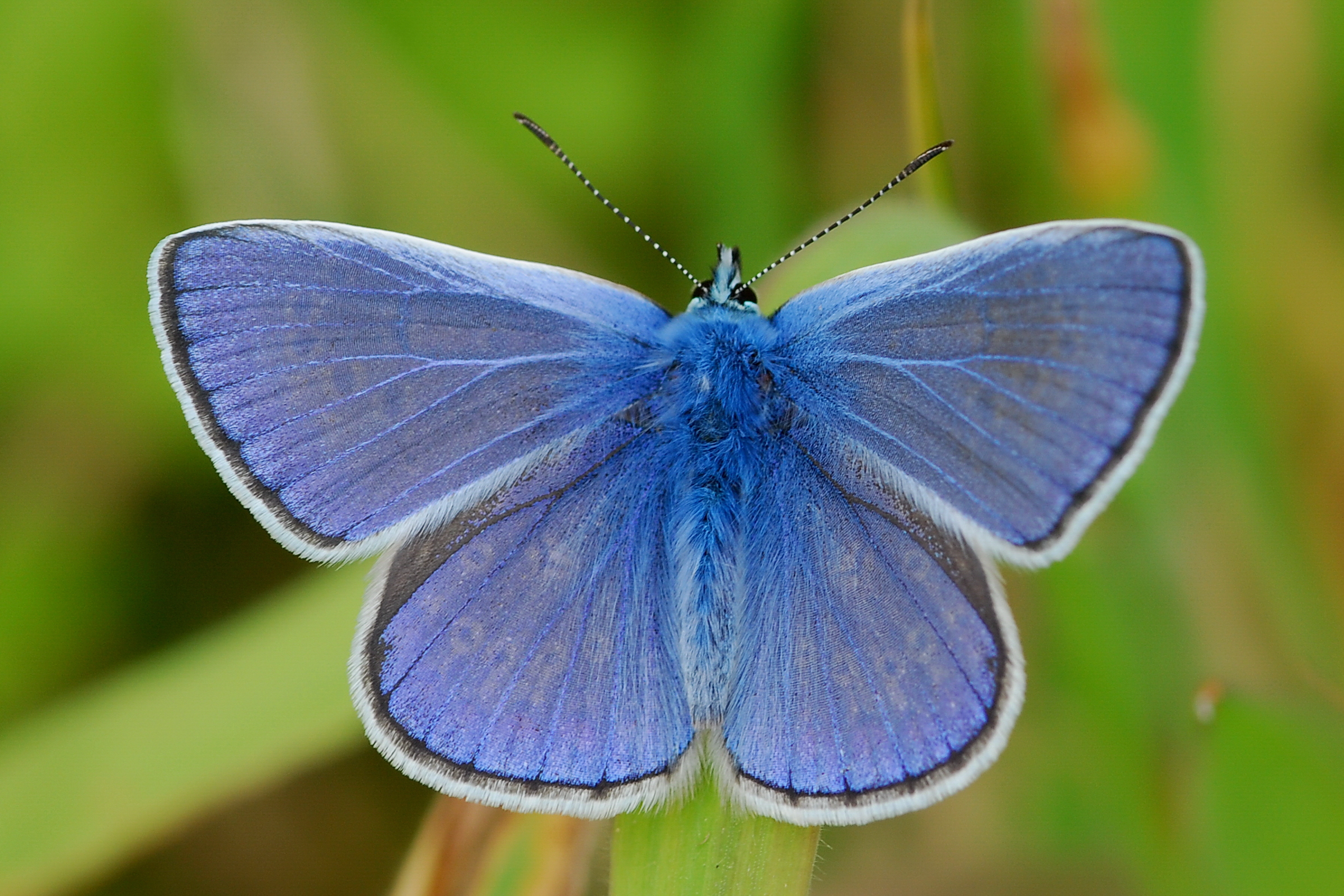 Populations of grassland butterflies decline almost 50 % over two.