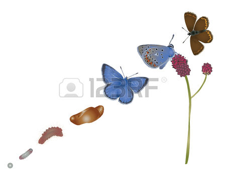 916 Common Blue Cliparts, Stock Vector And Royalty Free Common.