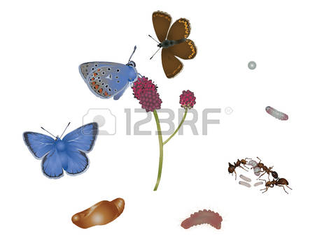 5,833 Life Cycle Stock Vector Illustration And Royalty Free Life.