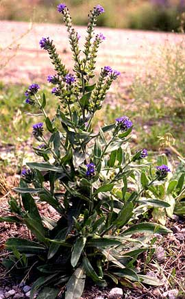 Noxious Weed Alert and Quick Reference.