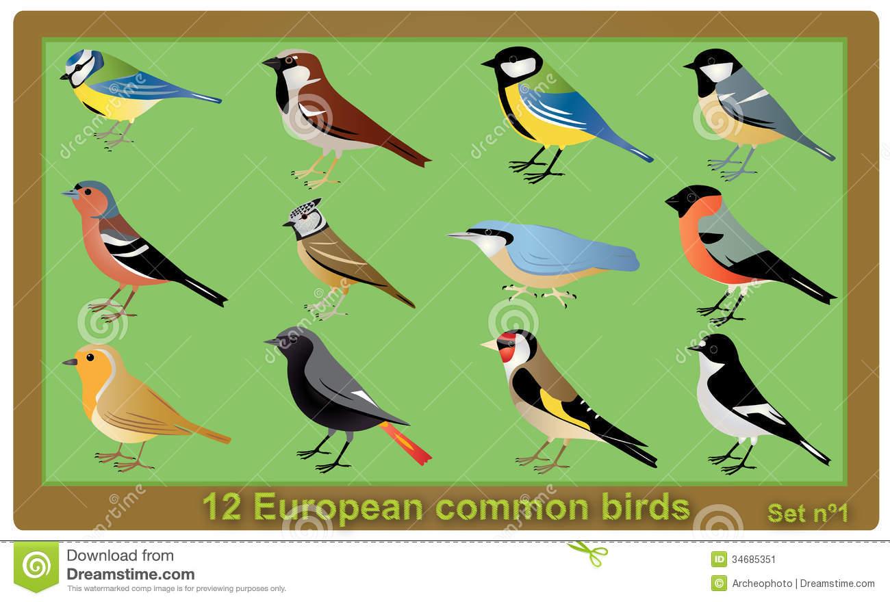 European Common Birds Stock Image.
