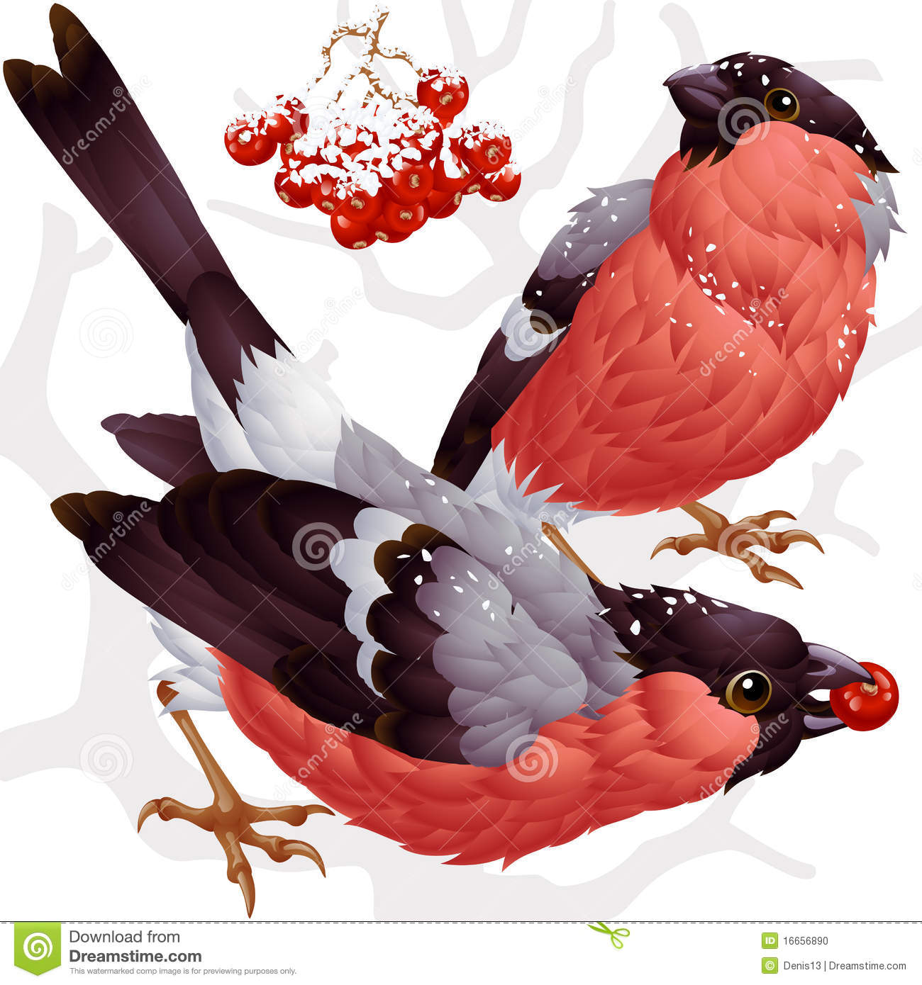 Vector Bullfinch And Ashberry Stock Photo.