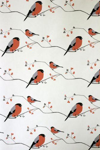 1000+ ideas about Bullfinch on Pinterest.