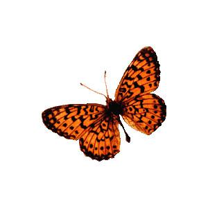 Butterflies & Dragonflies.