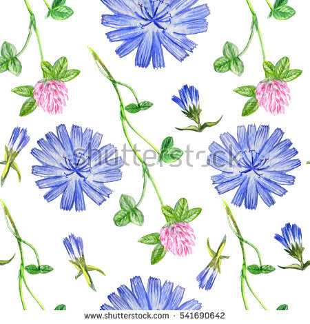 Chicory Plant Stock Photos, Royalty.