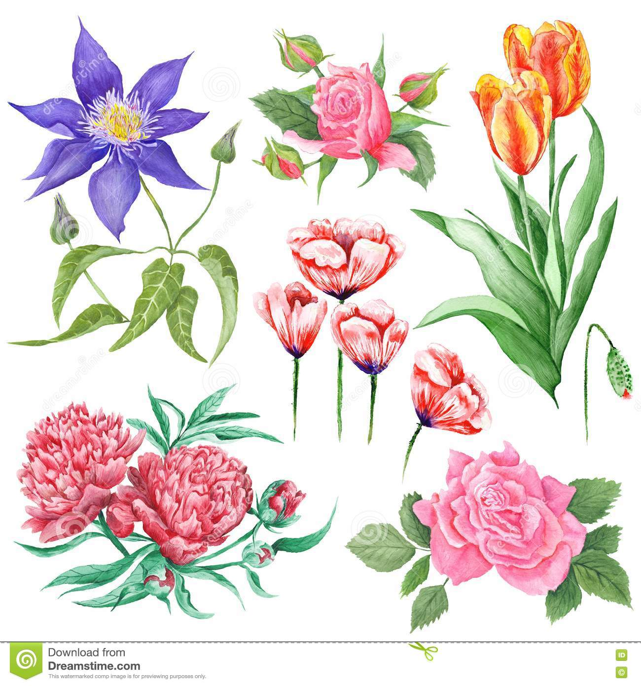 Watercolor Botanical Illustrations Of Summer Flowers Stock.