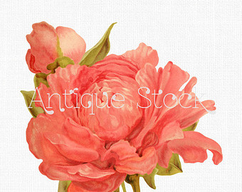 Flowers Clip Art 'Rose Anemone Clematis' Digital by AntiqueStock.