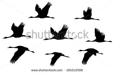 Crane Bird Flying Stock Images, Royalty.