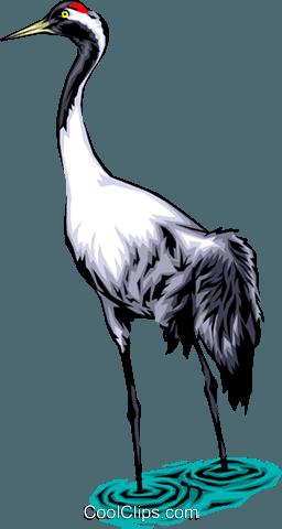 Common crane Royalty Free Vector Clip Art illustration.