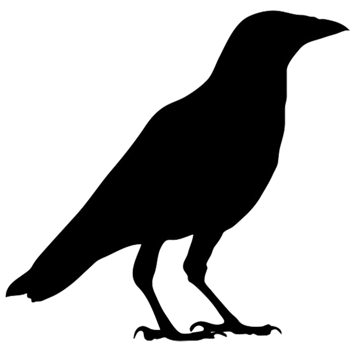 Flying Crow Png.