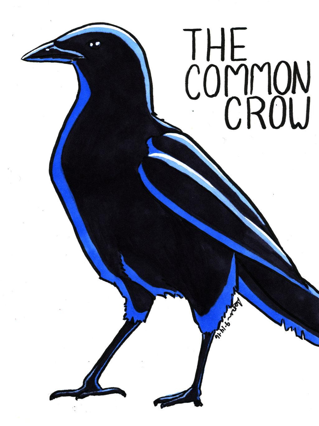 The Common Crow by imaprettykittykat on DeviantArt.