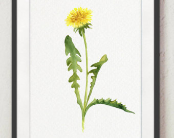dandelion clip art.
