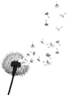 Vector Images, Illustrations and Cliparts: vector dandelion.
