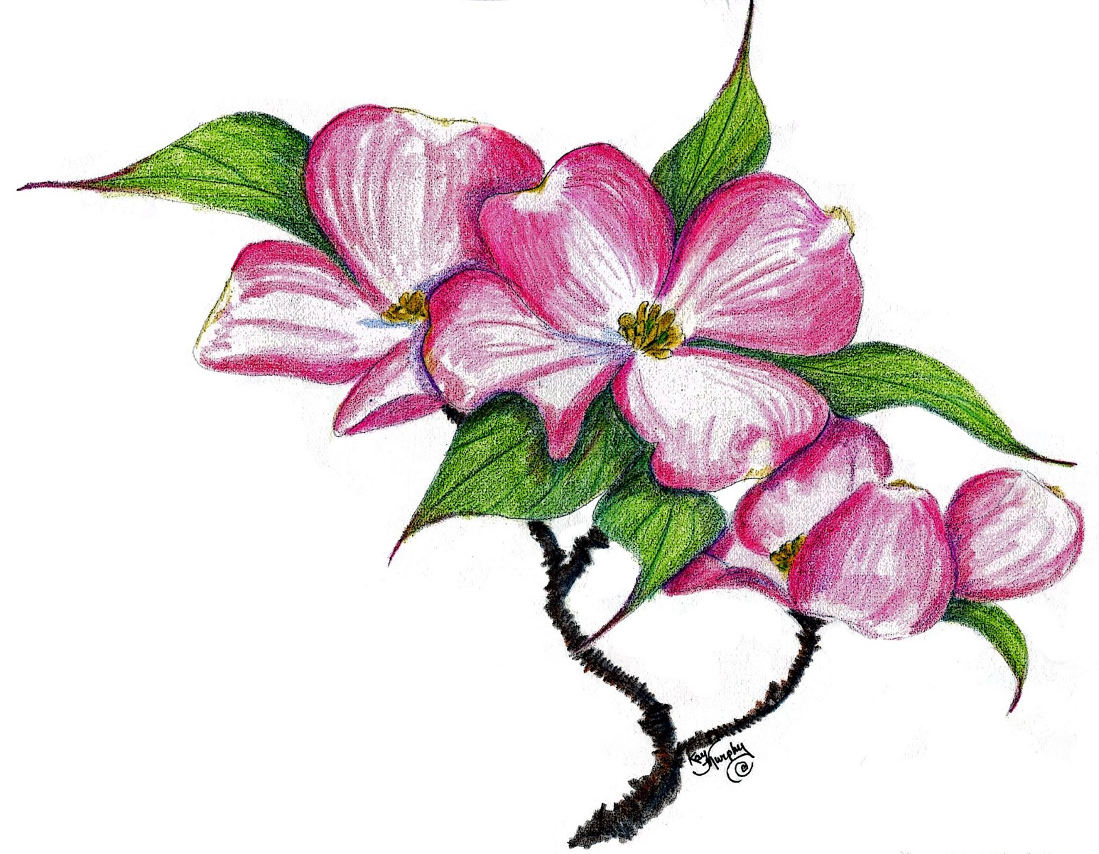 Dogwood Flower Clip Art.