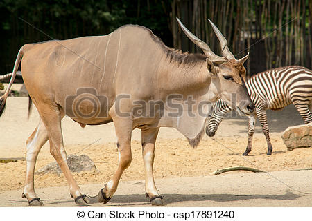 Stock Photo of Standing brown common eland with spiral horns.