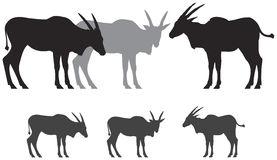 Common eland clipart #12