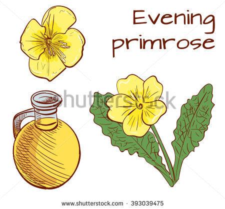 Evening Primrose Stock Photos, Royalty.