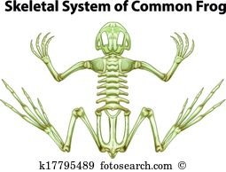 Common frog Clip Art Vector Graphics. 25 common frog EPS clipart.