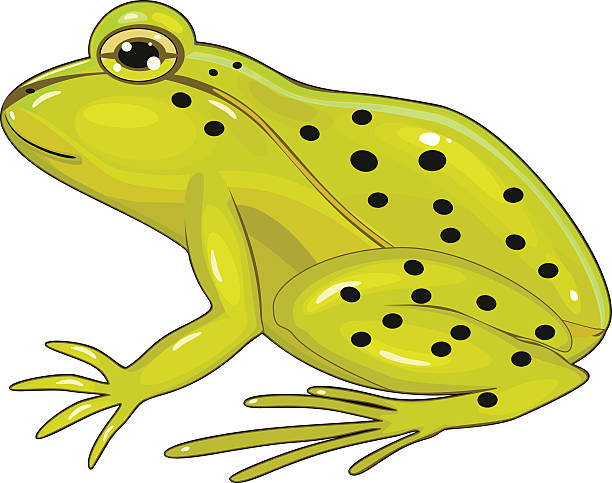 Common Frog Clip Art, Vector Images & Illustrations.