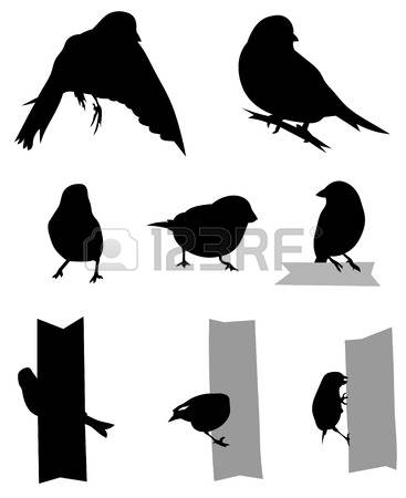 Greenfinch Stock Vector Illustration And Royalty Free Greenfinch.