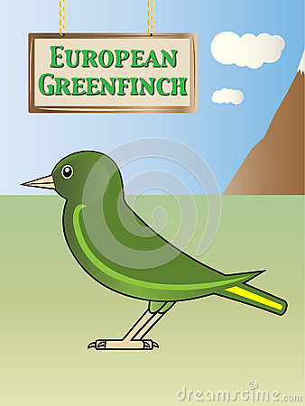 Greenfinch Stock Illustrations, Vectors, & Clipart.