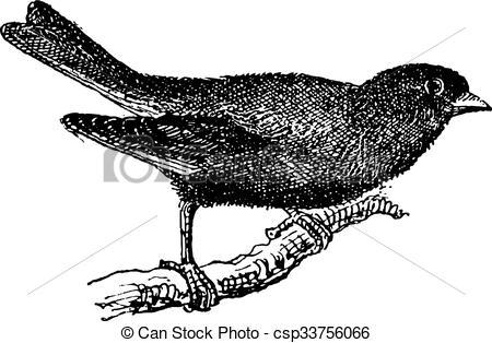 Clip Art Vector of Greenfinch or Carduelis chloris, vintage.