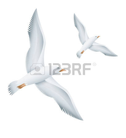 252 Mew Gull Stock Vector Illustration And Royalty Free Mew Gull.