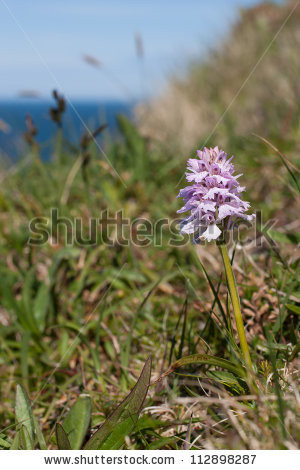 Common heath spotted orchid clipart #2