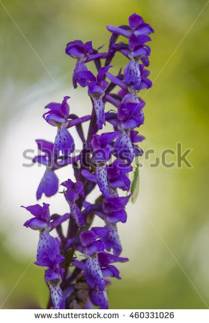 Common heath spotted orchid clipart #17