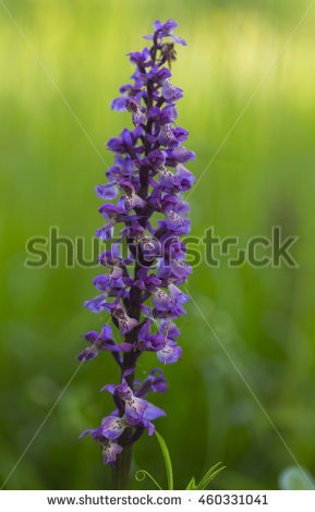 Common heath spotted orchid clipart #10
