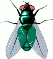 Housefly Clipart.
