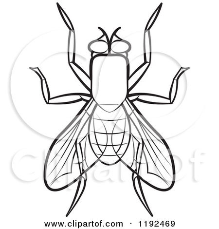 Clipart of a House Fly.