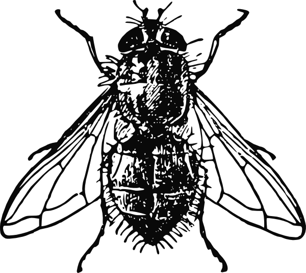 House Fly Clipart.