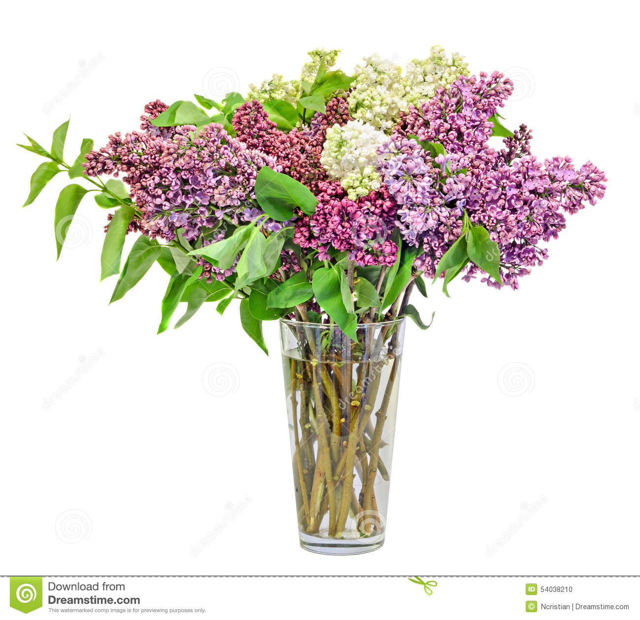 Purple Lilac Flowers Isolated On White Royalty Free Stock Images.