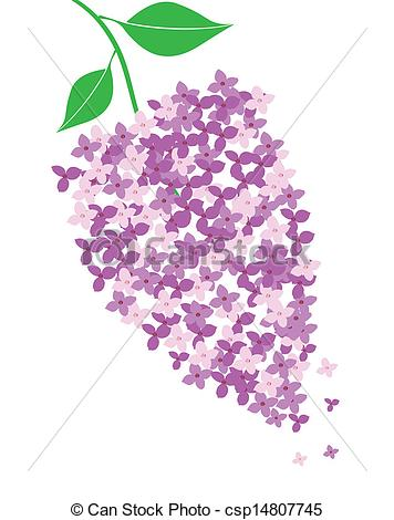 Lilac Stock Illustrations. 16,492 Lilac clip art images and.