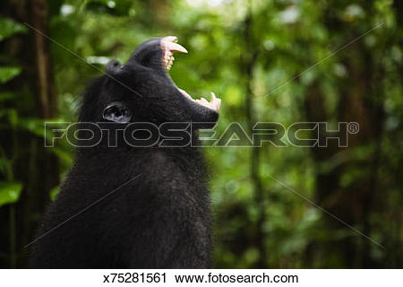 Stock Photography of Male black.
