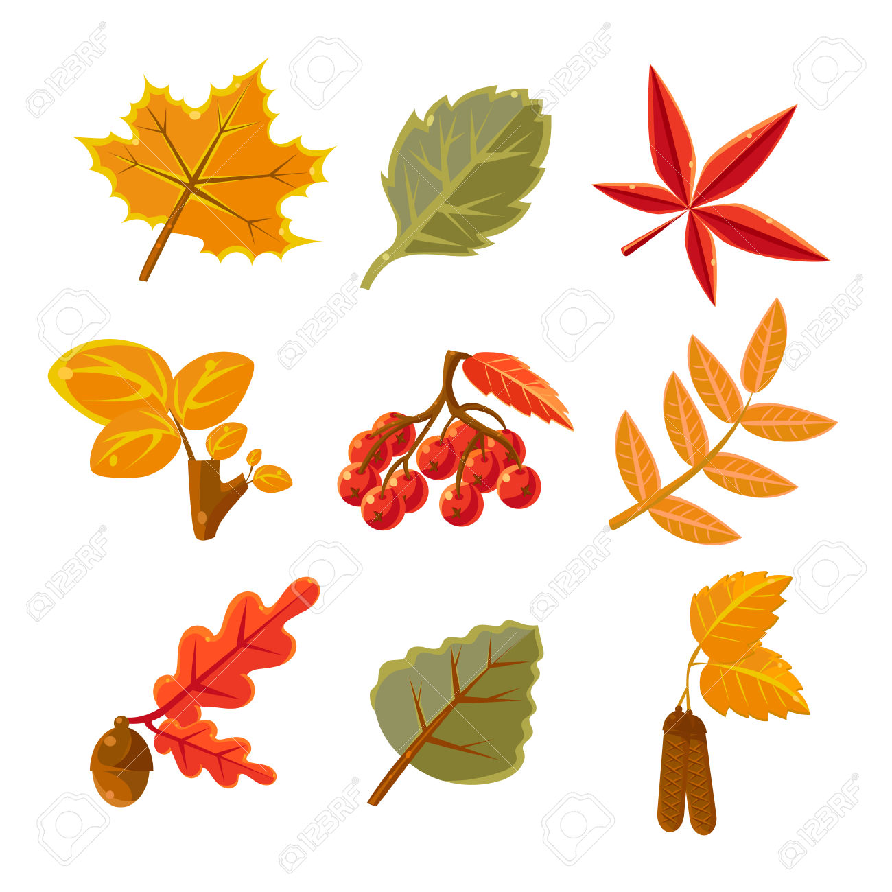 Autumn Common Forest Leaves Set Flat Vector Design Isolated Items.