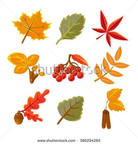 Common maple clipart #12