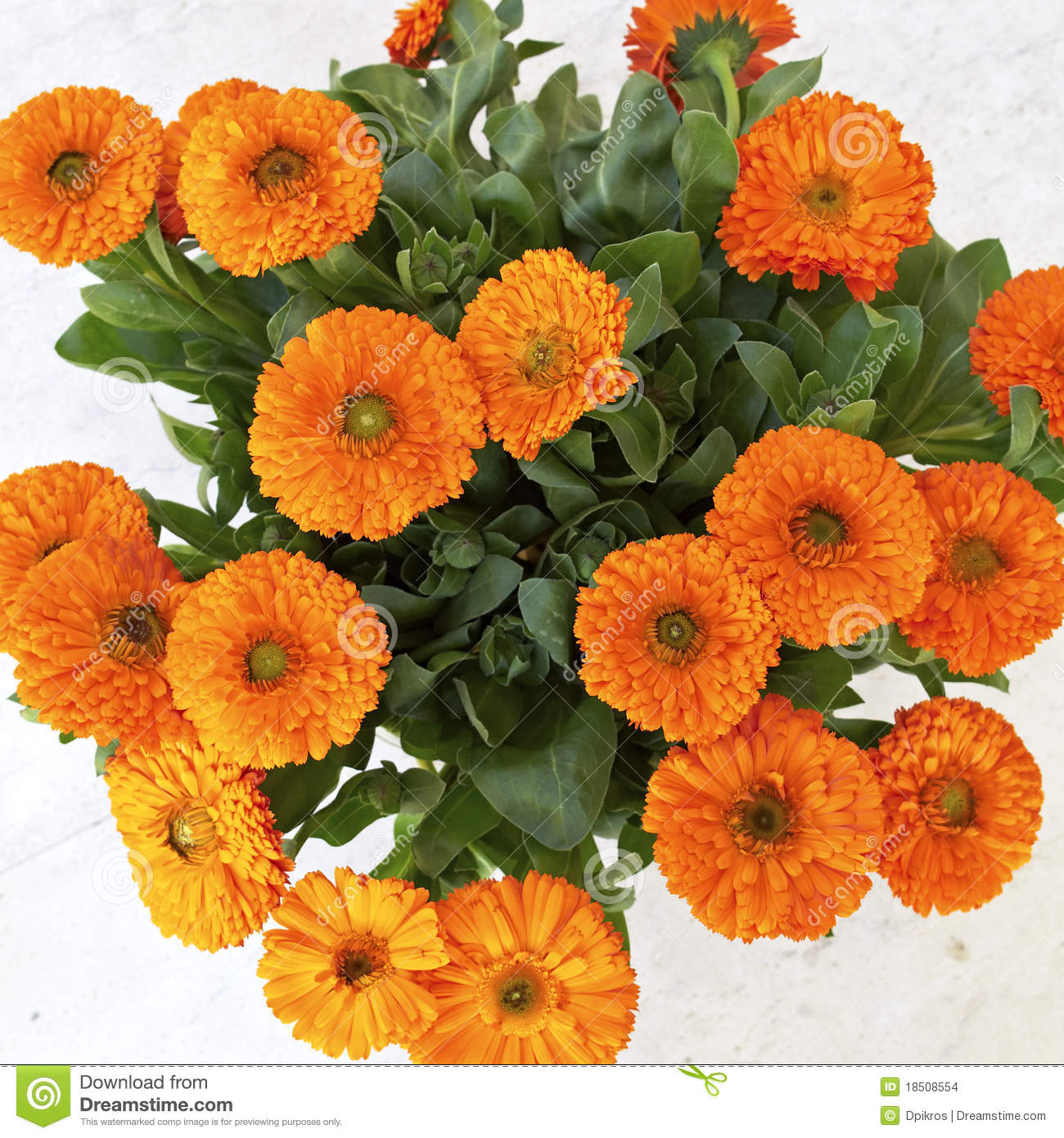 Orange Calendula (marigold) Flowers Stock Images.