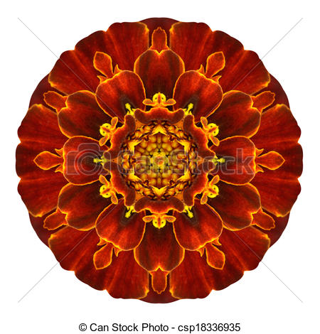 Drawings of Red Concentric Marigold Mandala Flower Isolated on.