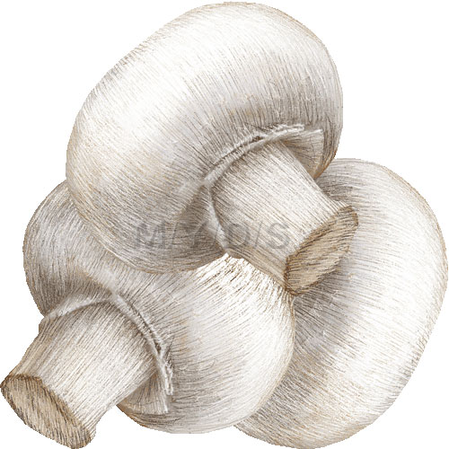 Common Mushroom, Button Mushroom, White Mushroom clipart / Free.