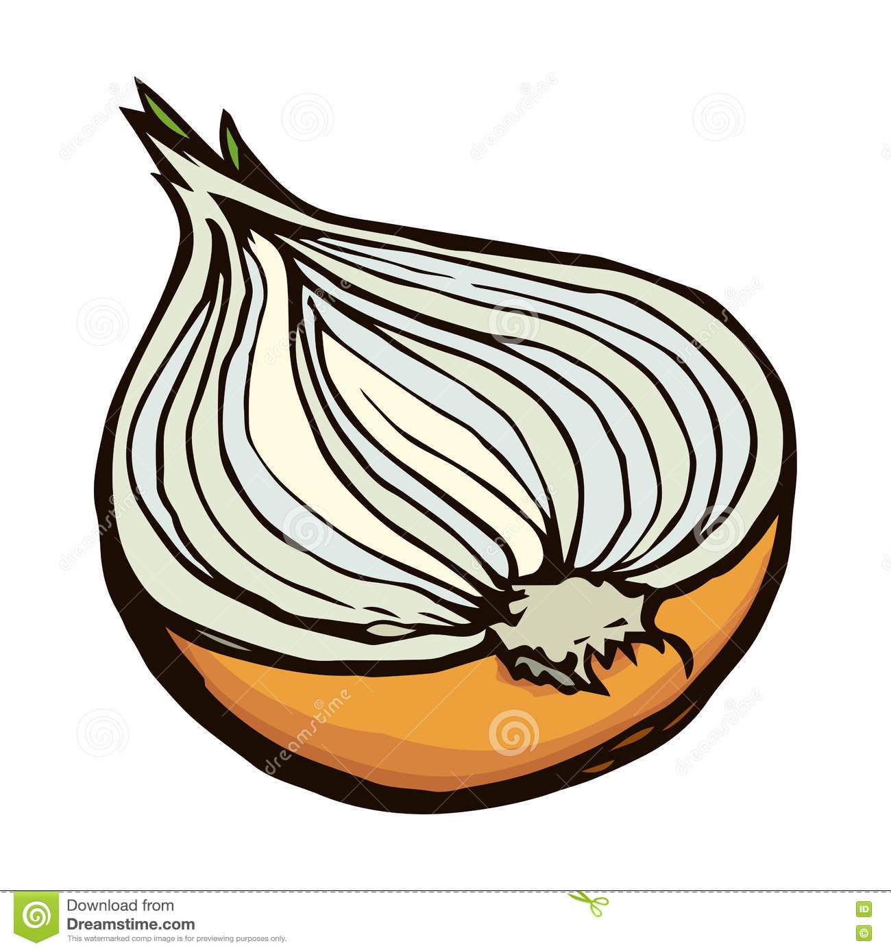Half Of Onions. Vector Drawing Stock Vector.