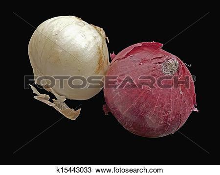Stock Photo of Onion, Allium cepa, Common vegetable k15443033.