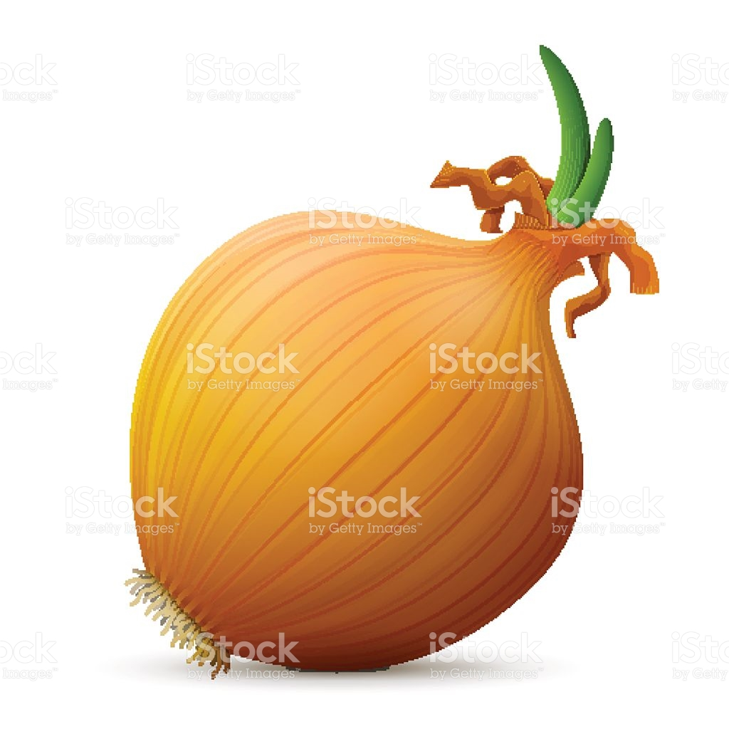 Common Onion With Small Leaves Close Up stock vector art 505972814.