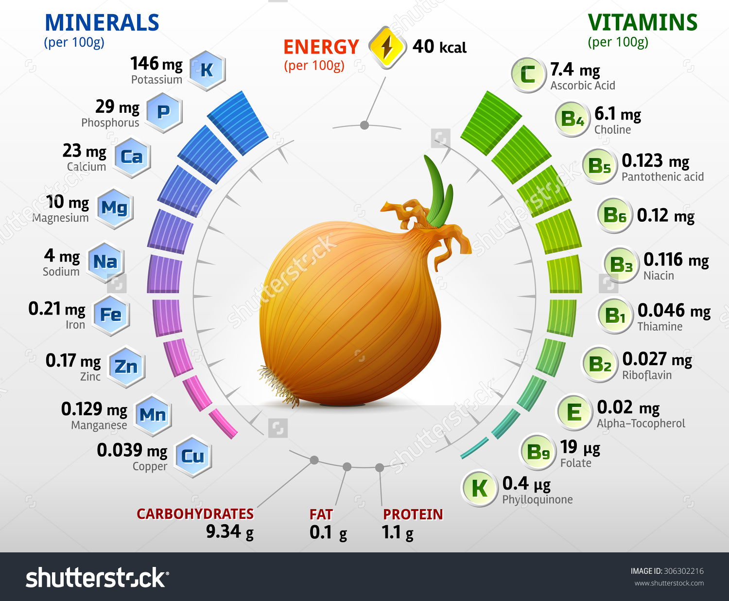 Vitamins Minerals Common Onion Infographics About Stock Vector.