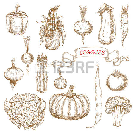 Common Bean Cliparts, Stock Vector And Royalty Free Common Bean.