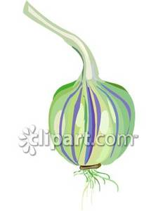 Common_White_Onion_Royalty_Free_Clipart_Picture_090409.